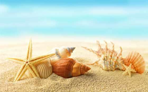 пляж, море, ракушки