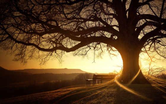 природа, дерево, рисованные, солнца, fone, есть, тег, всех, которых, rays,
