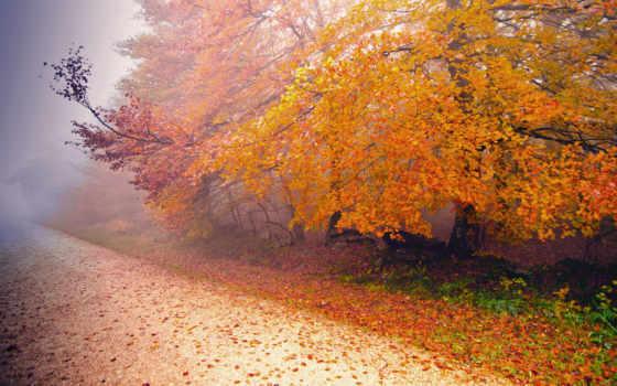 осень, туман, природа, дерево, дорога, поздняя, утро, река,