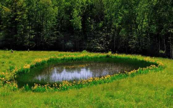 природа, поле, лес, пруд, весна,
