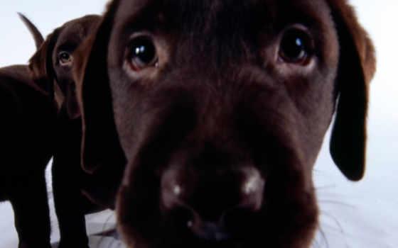 perros, fondos, perro