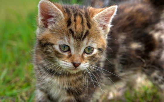 cute, кот, котенок, baby, глаза, трава, eyes, ключи,