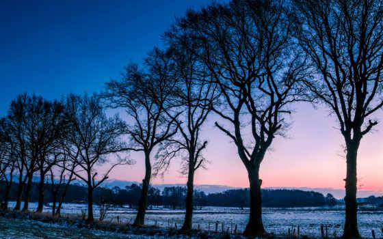 winter, trees, природа, утро, поле, free, kartinik, снег