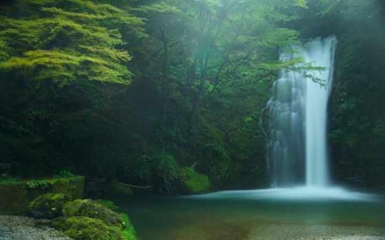дерево, природа, растение, водопад, leaf, water, поток, зелёный, картинка, land, озеро