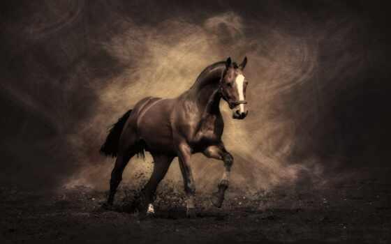 лошадь, alive, картинка, опт, aptoide, dhgate