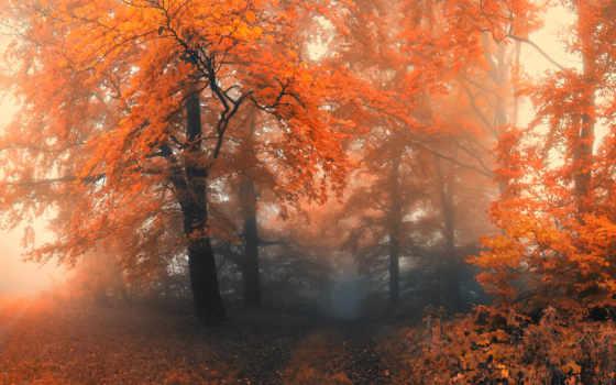 туман, деревья Фон № 32222 разрешение 1920x1080