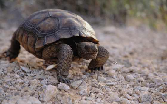 пазл, черепаха, противоположности