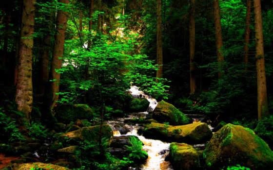 найди, природа, лес, ответы, уровни, game, река, water, уровень, animal, горы,