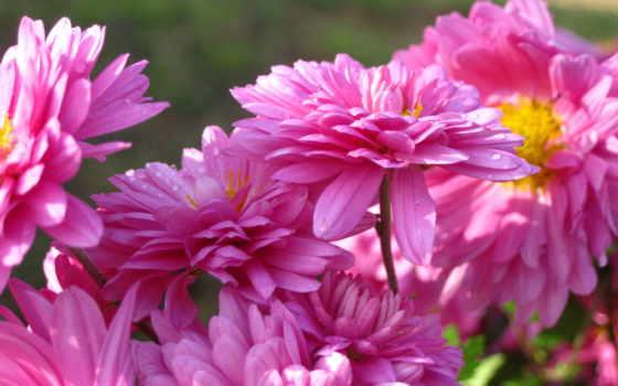 flowers, цветы, cvety, sun, розовый, природа, красиво, petals,