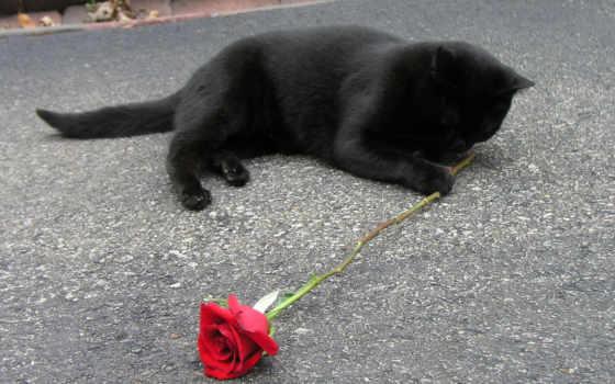 кот, страница