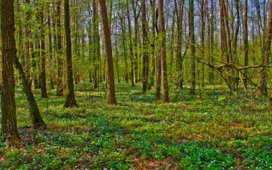 лес, природа, картинка, viewing, ноябрь, mobile, receive, forward, увеличить