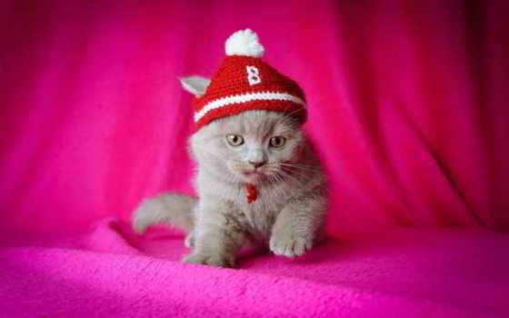 розовый, котенок, шапка