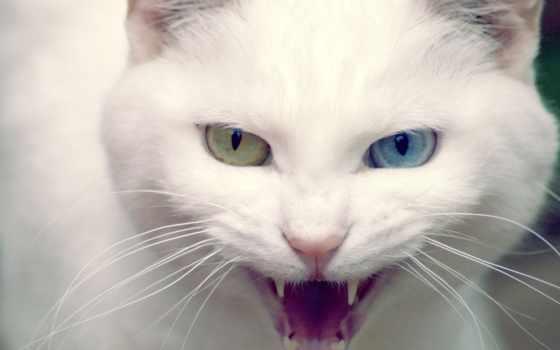 кот, глазами, кошек