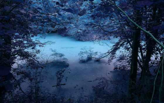природа, ночь, trees