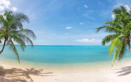 море, пальмы, puzzle