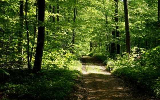 summer, лес, дорога, природа, леса,