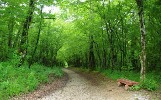 лес, скамейка, зелёный, трек, trees, uni, sito, мб,