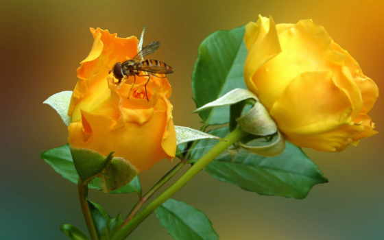 thường, pinterest, rosa, abeja, flores, trải, tim, yêu,
