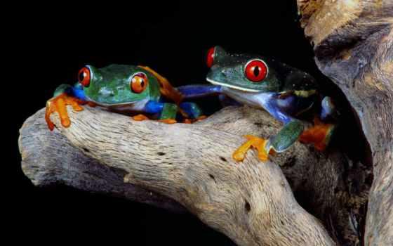 лягушки, красивые, лягушек, картинка, фотографий, лягушка, доступна, zhivotnye, картинку, этого,