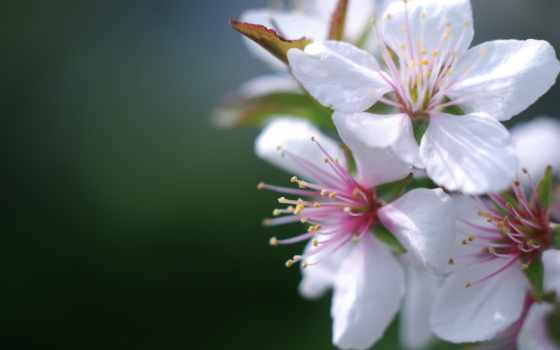 информация, весна, arnusha, цитата, творчества, рамки, фоны, текстуры, community, цитатник,