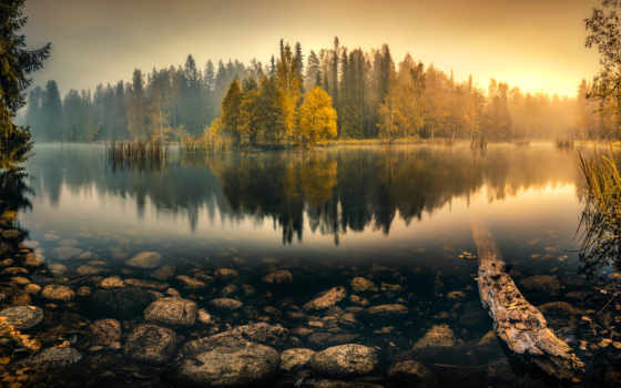 лес, trees, туман, озеро, осень, пруд, природа,
