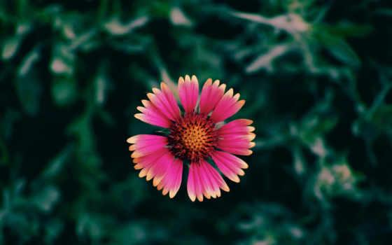 красный цветок Фон № 49770 разрешение 2560x1600