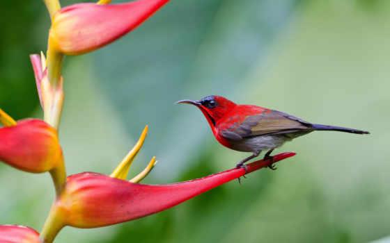 птица, птицы, острохвостая