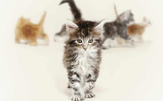 котята, кошки, zhivotnye, красивые, рыжие, котенок, свет, серые, красивый, животных, прикольные,