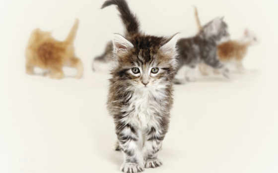 котята, кошки, zhivotnye