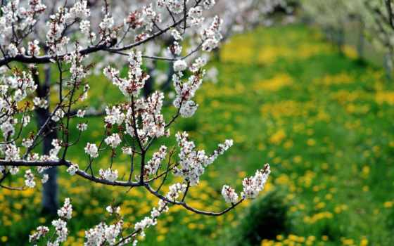 garden, цветение, природа, весна, salt, фоновые, горы, самая, рисунки, садов,