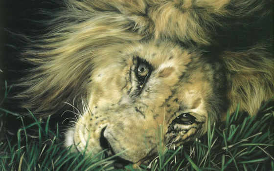 paintings, animals, pinterest, art, об, живопись, animal, харрисон, best, животные,
