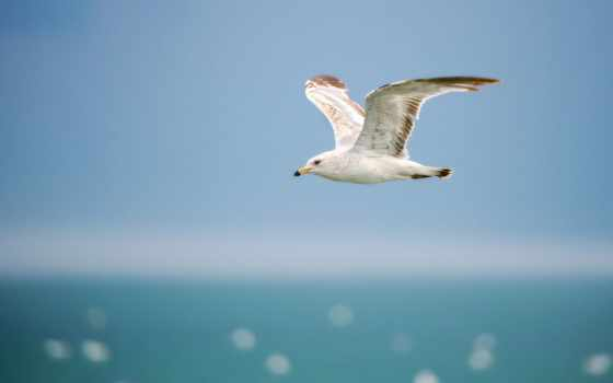 chim, hội, seagull, небо, птицы, чайка, hành,