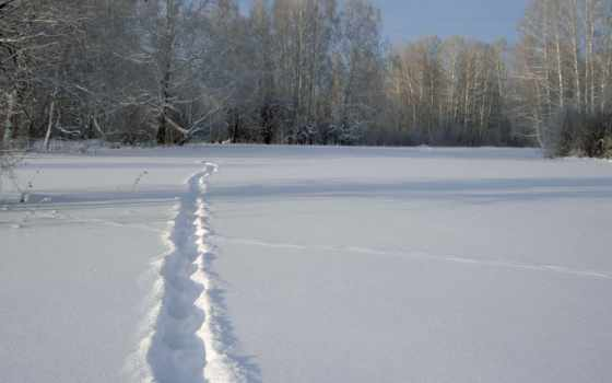 ,зима,тропинка, лес, снег,