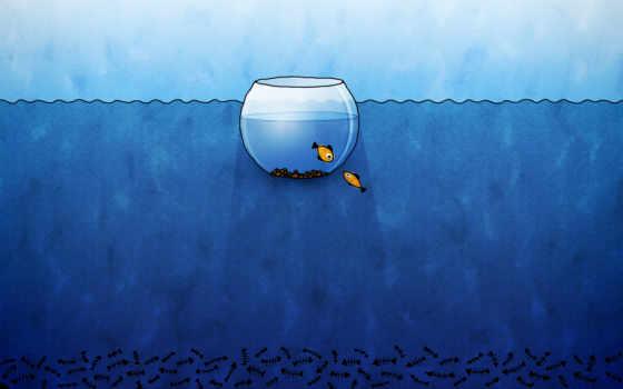 аквариум, facebook