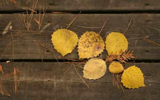 листья, доски, осень
