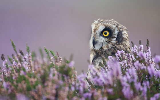 сова, птица, profile