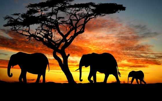 слон, фотообои, нашего