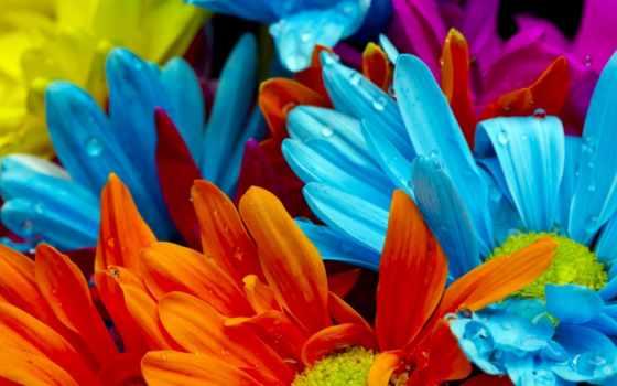 яркие, цветы, разрешений