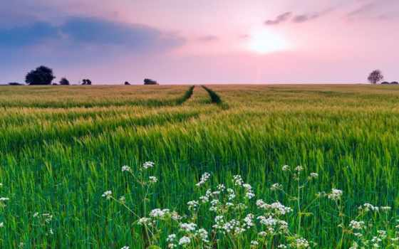 весна, природа, summer, трава, цветы, небо, например, поле, лес,