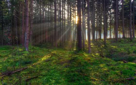 волыни, травы, леса, кг, трав, sale, целебных, товар, новости, за,