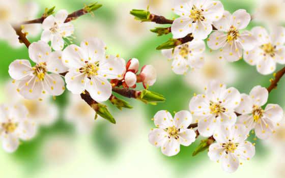 весенние, цветы, flora, текстуры, часть, trees, ветки, liveinternet, природа, листва,