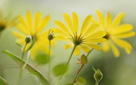 cvety, цветов, лепестки, бутоны, мар, parede, разнообразие,