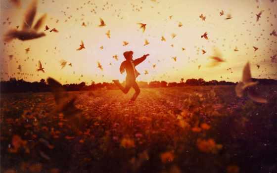 поле, парень, run, картинка, птицы, sun, закат, похожие,