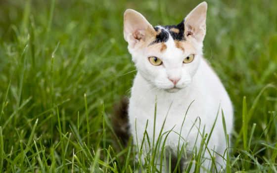 pad, кот, mouse, animal, трава, палуба, calico, file, офис