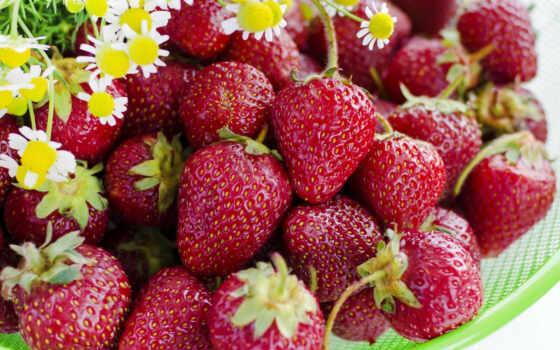 клубника, цветы, ягода, meal, ворс, red