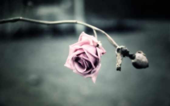 you, скучать, memories, порою, лицо, роза,