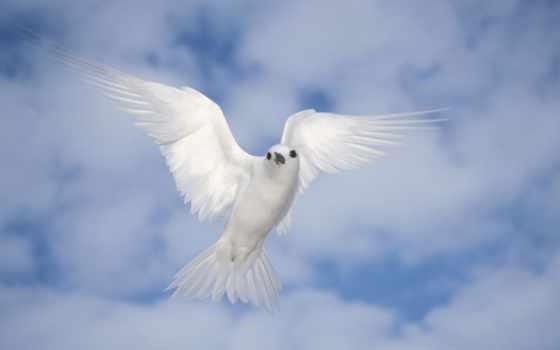 ,мир,голубь,белый,небо,