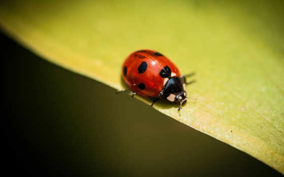 макро, природа, animals, изображений, божья, коровка, description, код, wasp,