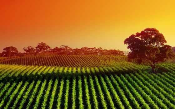 margin, пейзажи -, поле