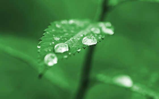 лист, зелёный, макро, капли, дождь, summer, лед,